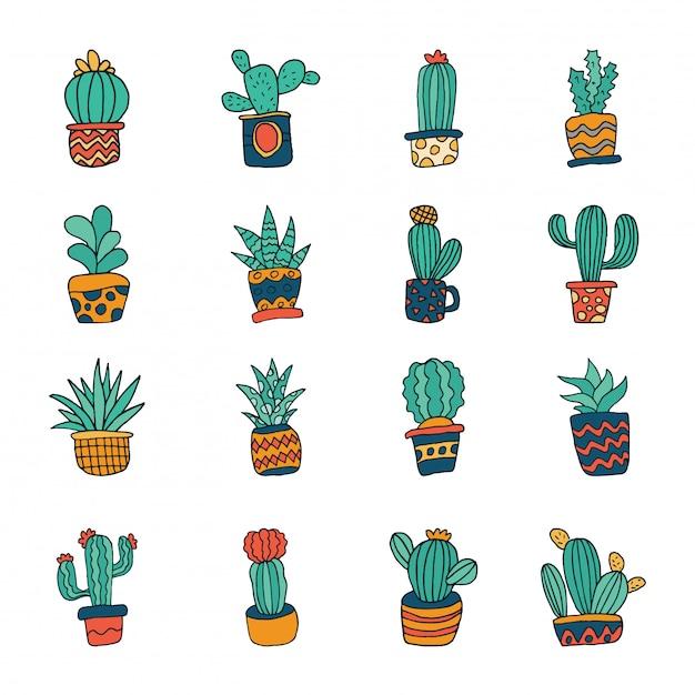 Cactus Succulent Vecteur Premium