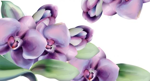 Cadre aquarelle de fleurs d'orchidées Vecteur Premium
