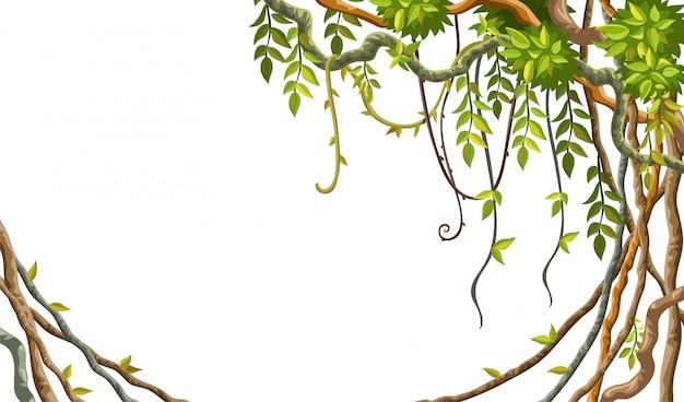 Cadre de branches de liane et de feuilles tropicales. Vecteur Premium