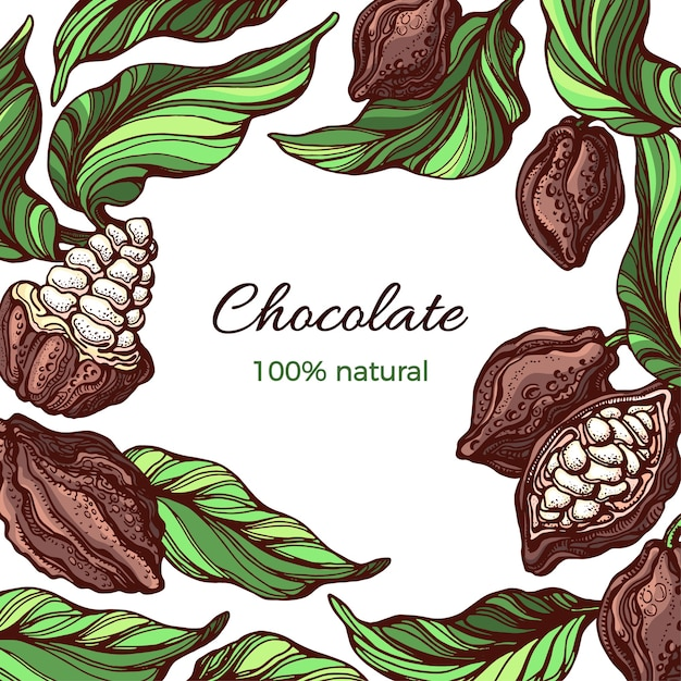 Cadre De Cacao Nature Design Feuille De Haricot De Fruits Tropicaux Illustration Dessinée à La Main Vecteur Premium