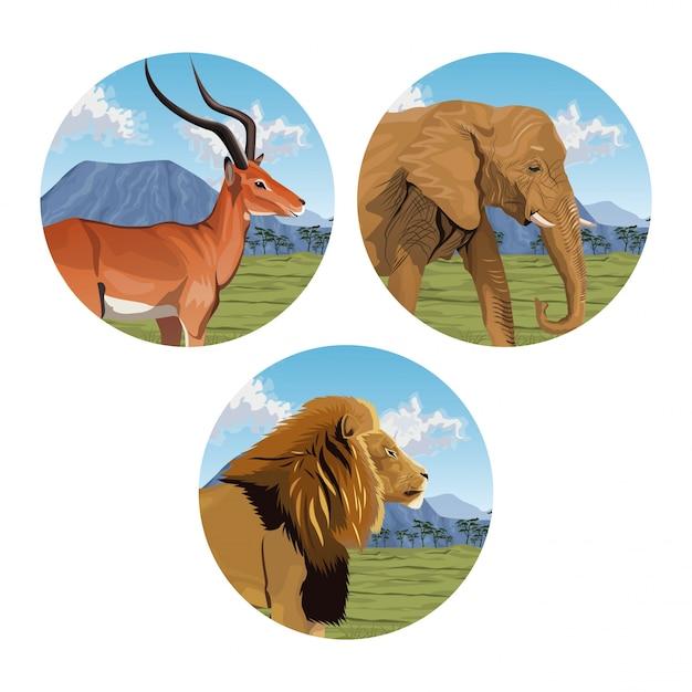 Autocollant Paysage Afrique éléphants Affenbrotbaum Savane Désert Safari Autocollants