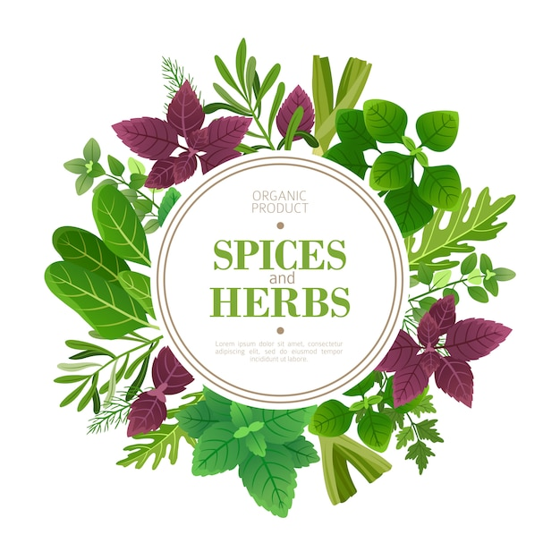 Cadre D'épices Et D'herbes. Herbes Fraîches Faisant Cuire Des Plantes Aromatiques. Cadre De Vecteur De Cuisine Indienne Vecteur Premium