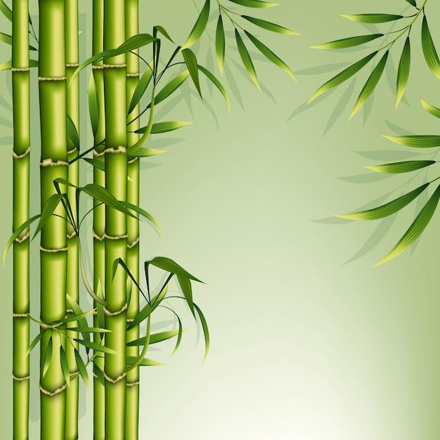 Cadre de fond en bambou Vecteur Premium