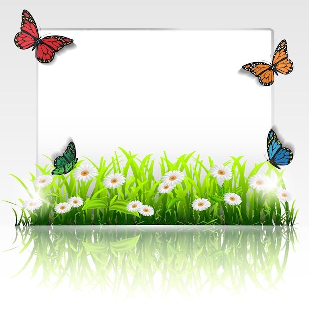 Cadre avec herbe, camomille et papillons Vecteur Premium