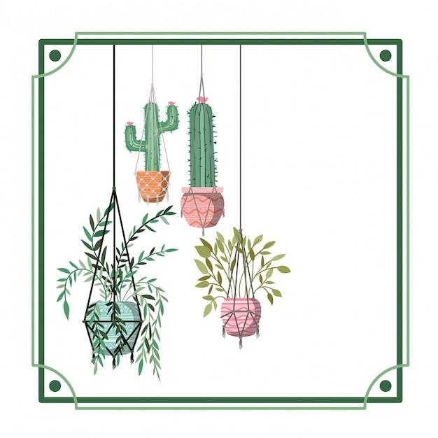 Cadre avec plantes d'intérieur sur des cintres en macramé Vecteur Premium