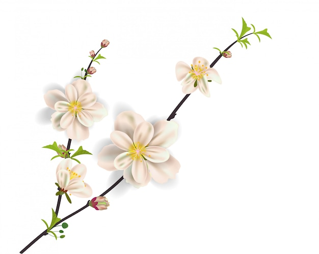 Cadre sakura aquarelle. fond avec des branches de cerisier de fleur. Vecteur Premium