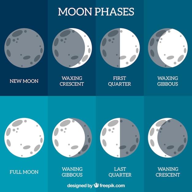 Calendrier de phase lunaire Vecteur gratuit