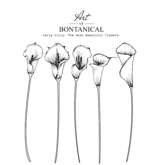 Calla lily leaf et dessins de fleurs Vecteur Premium