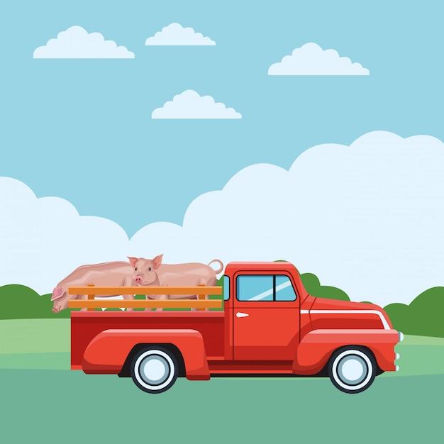 Camion et cochon Vecteur Premium