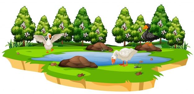 Canard Isolé à L'étang Vecteur gratuit