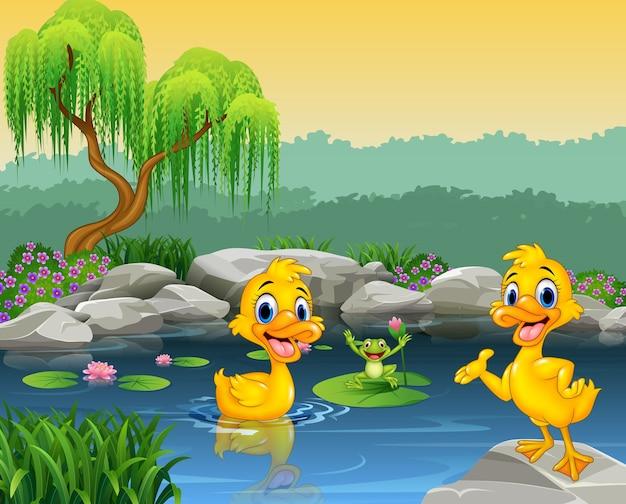 Canards mignon nageant sur l'étang et la grenouille Vecteur Premium