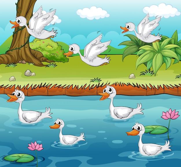 Canards de natation et de vol Vecteur gratuit