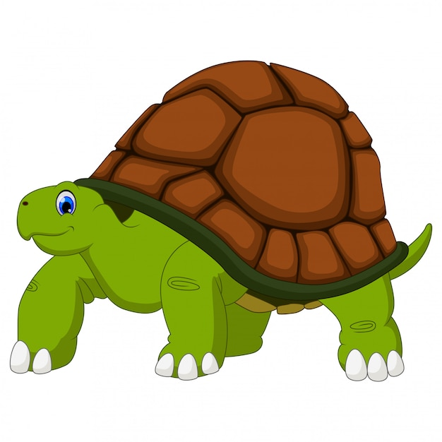 Caricature de tortue mignon sur blanc Vecteur Premium