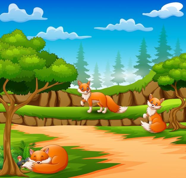 Caricature de trois renards heureux sur la scène de la nature Vecteur Premium