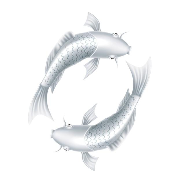 Carpe Koi Réaliste Poisson Symbole Oriental Vecteur Premium