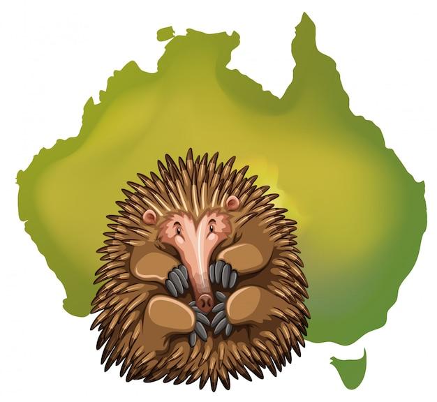 Carte d'echidna et de l'australie Vecteur gratuit