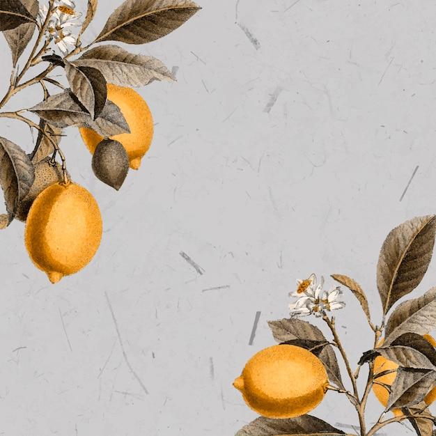 Carte vierge de citronnier Vecteur gratuit