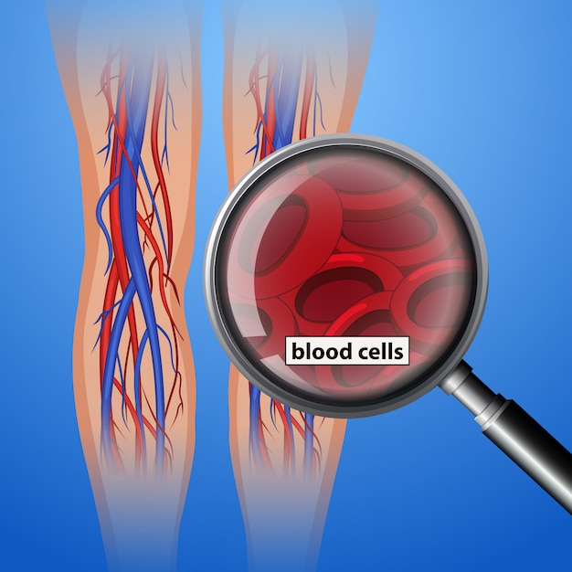 Cellules sanguines humaines Vecteur Premium