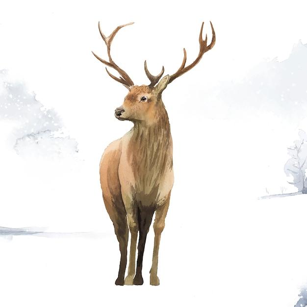 Cerf mâle peint par vecteur aquarelle Vecteur gratuit