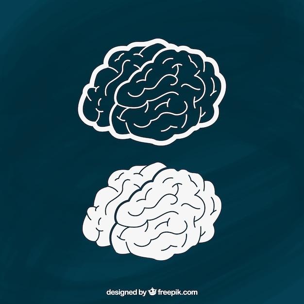 Cerveaux dessinés à la main Vecteur gratuit