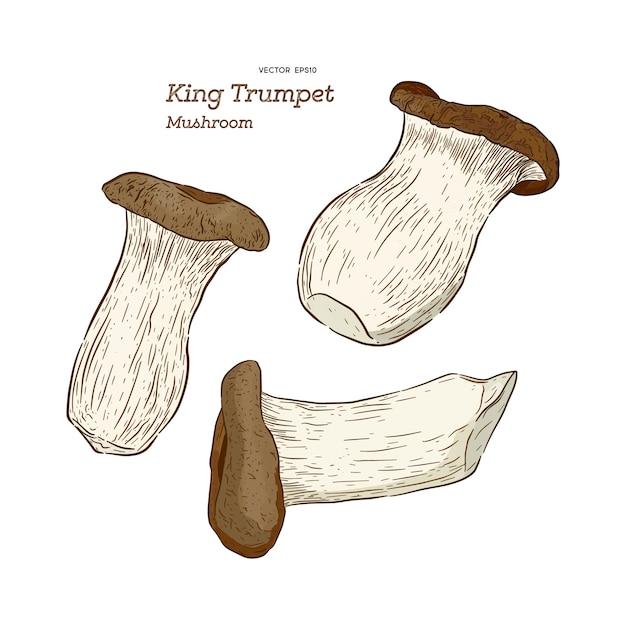 Champignon type roi trompette vector illustration Vecteur Premium