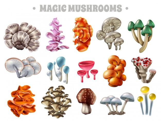 Champignons Magiques Vecteur gratuit