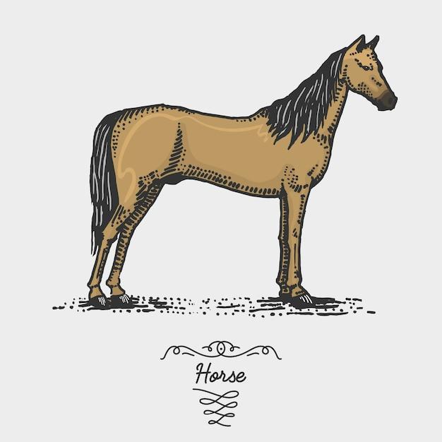 Cheval Gravé, Illustration Dessinée à La Main Dans Le Style De Gravure Sur Bois, Espèces De Dessin Vintage. Vecteur Premium