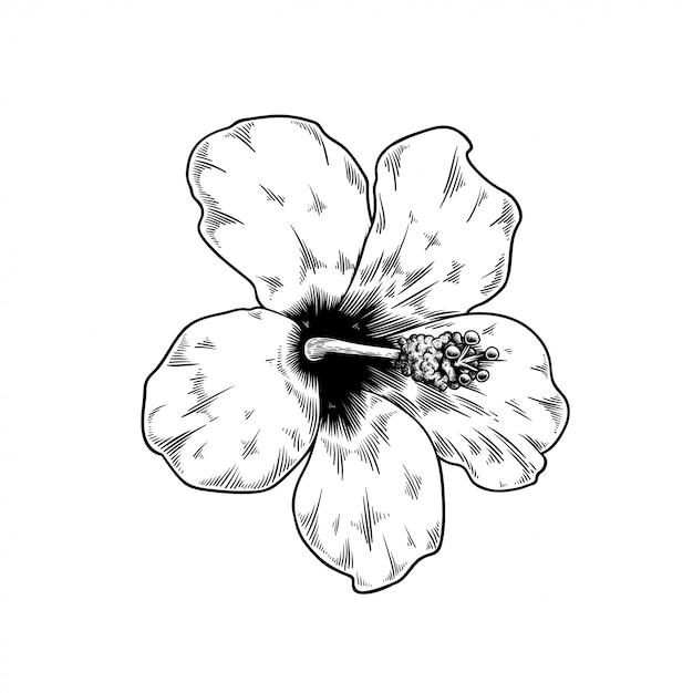 Chinois Rose Dessin Nature De La Fleur Vecteur Gratuite