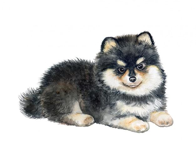 Chiot poméranie, chien pedigree. aquarelle. Vecteur Premium