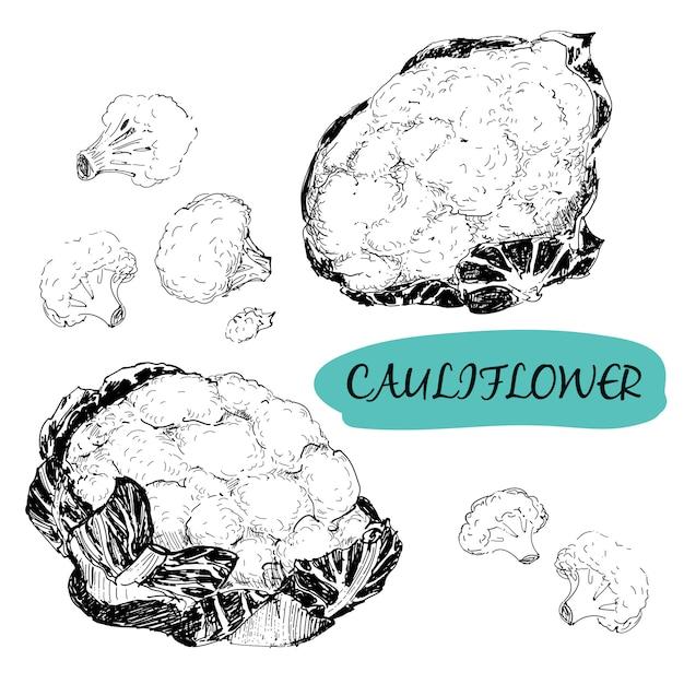 Chou-fleur en gravure Vecteur Premium