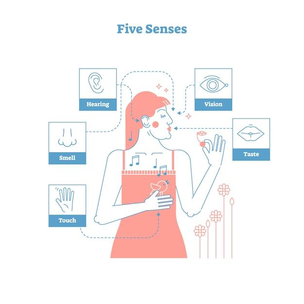 Cinq sens humains Vecteur Premium