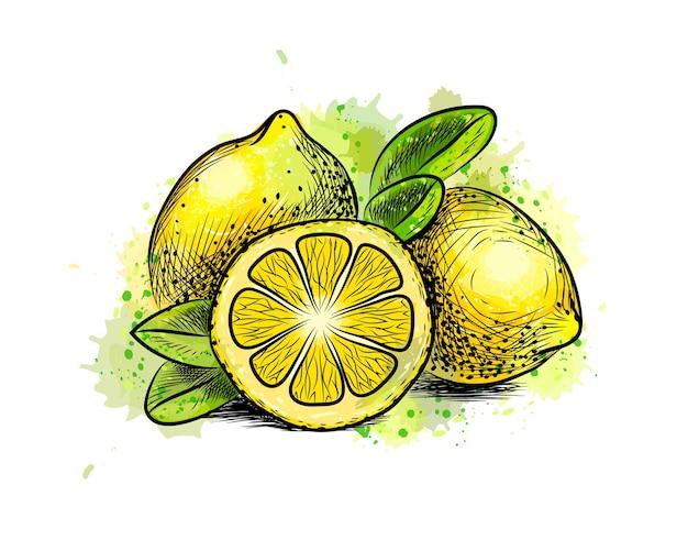 Citron Avec Des Feuilles D'une éclaboussure D'aquarelle, Croquis Dessiné à La Main. Illustration De Peintures Vecteur Premium