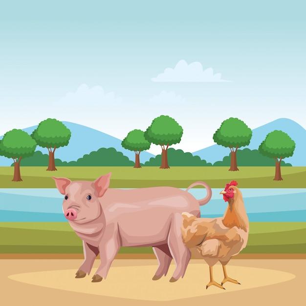 Cochon et poule Vecteur Premium
