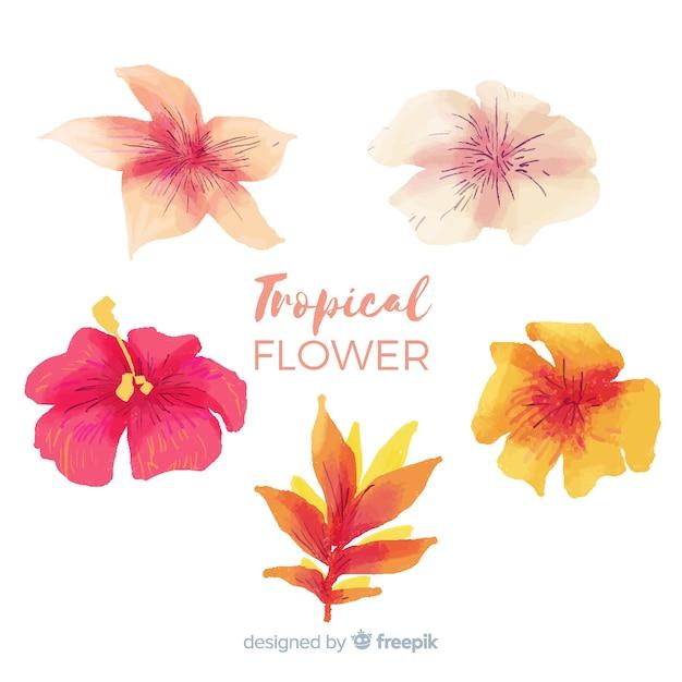 Collectio belle fleur aquarelle tropicale Vecteur gratuit