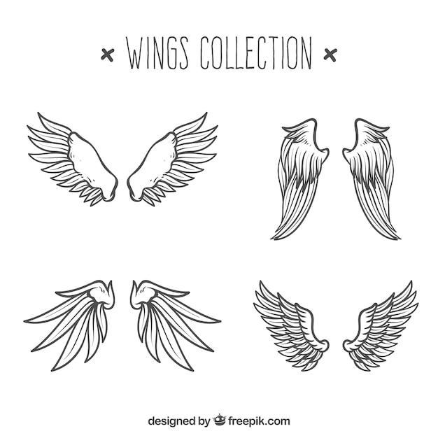 Collection D'ailes Dessinées à La Main Vecteur gratuit