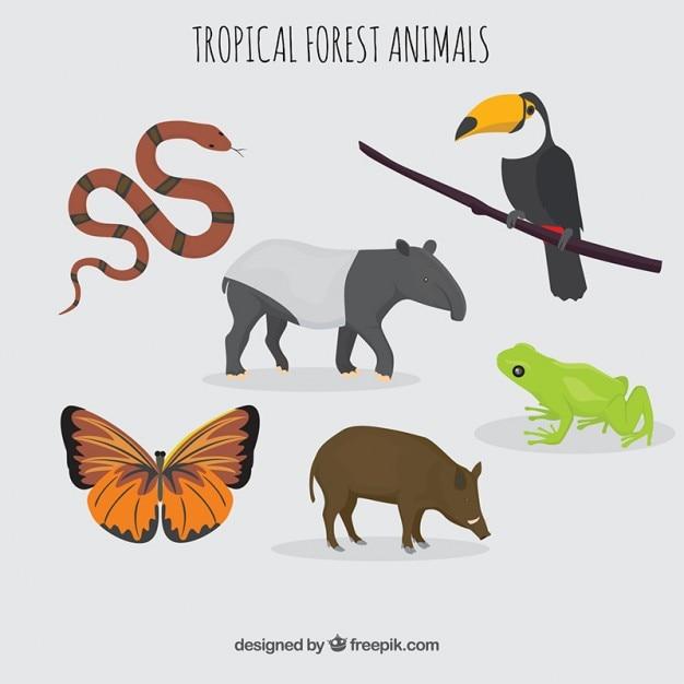 Collection animale tropicale et sauvage Vecteur gratuit
