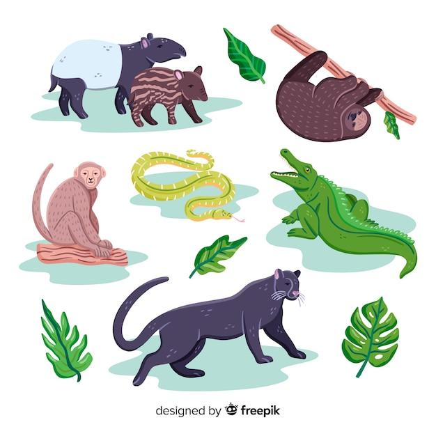 Collection d'animaux exotiques dessinés à la main Vecteur gratuit