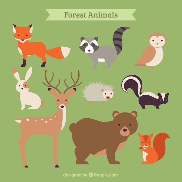 Collection d'animaux de la forêt dessinée à la main Vecteur gratuit