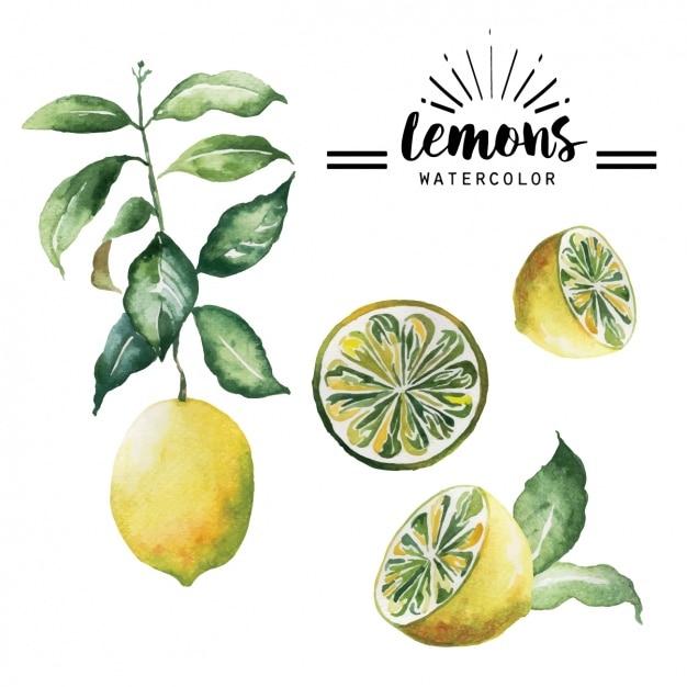 Collection aquarelle citrons Vecteur gratuit
