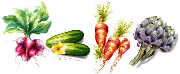 Collection aquarelle de légumes Vecteur Premium