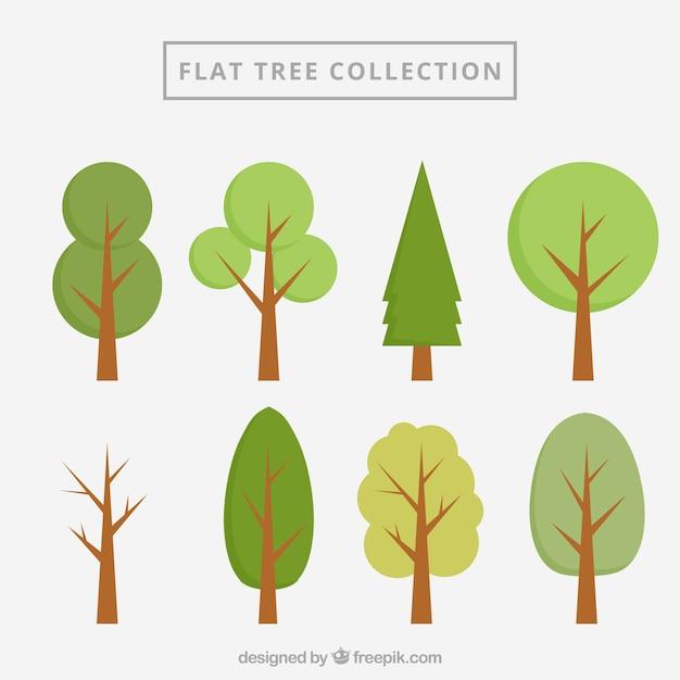 Collection arbres plats Vecteur gratuit