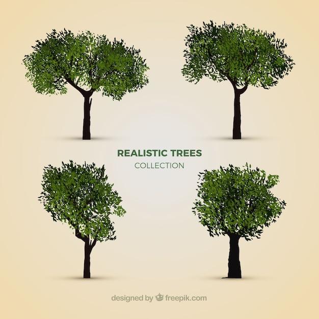 Collection D'arbres Réalistes Vecteur gratuit