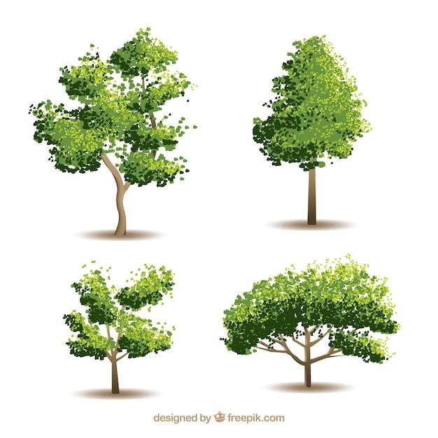 Collection D'arbres Avec Un Style Réaliste Vecteur gratuit