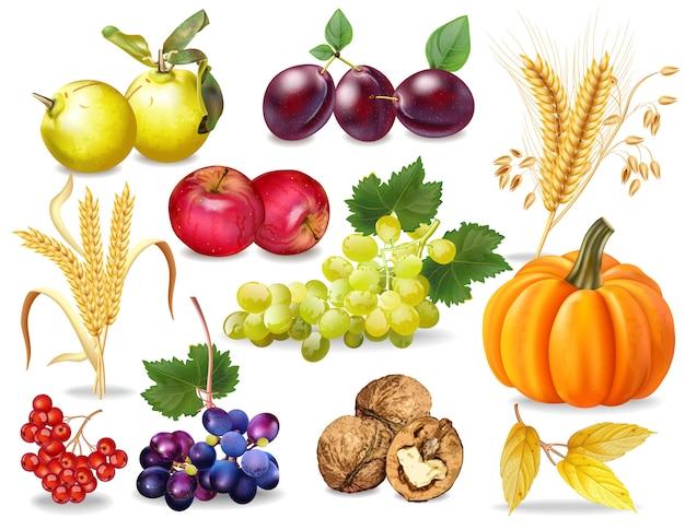 Collection automne fruits et légumes Vecteur Premium