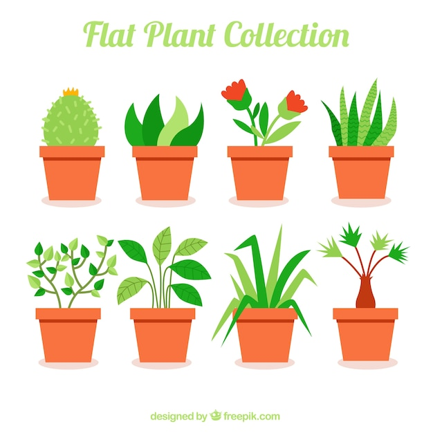 Collection De Belles Plantes En Design Plat Vecteur Premium