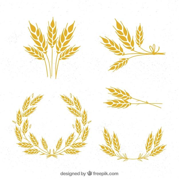 Collection de blé dessiné à la main Vecteur gratuit