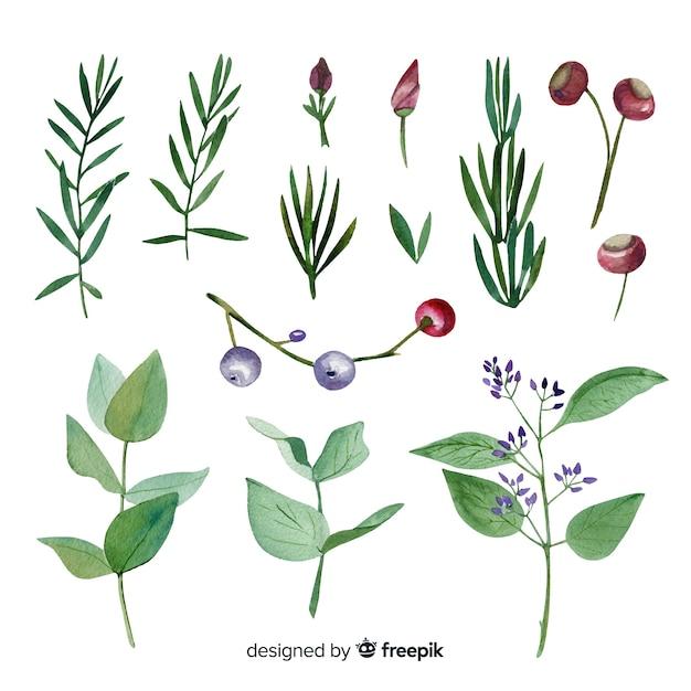 Collection de branches florales aquarelles colorées Vecteur gratuit