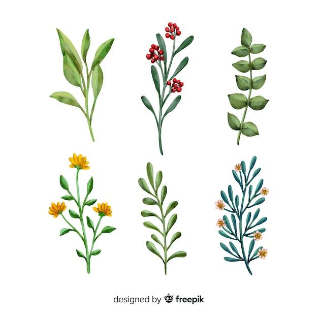 Collection de branches florales aquarelles Vecteur gratuit