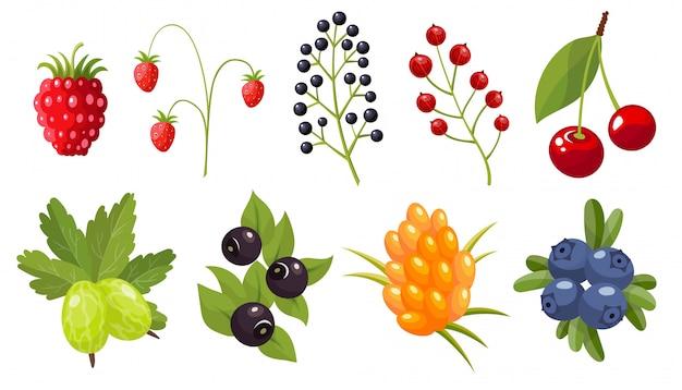 Collection De Brindilles De Baies Sauvages. Baie De Forêt. Fruits Sucrés. Vecteur Premium