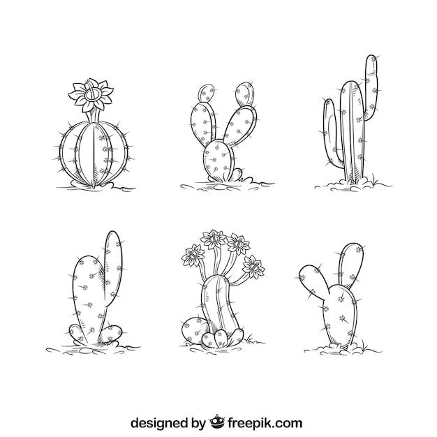 Collection de cactus dessinée à la main Vecteur gratuit